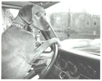 Drivingcosmo